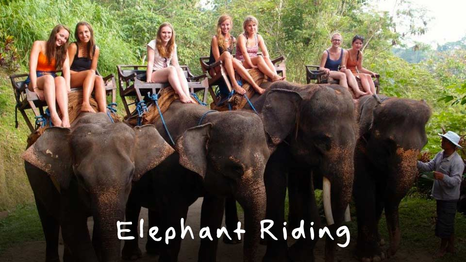 elephant-riding-tour